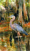 """Great Blue Heron II"""